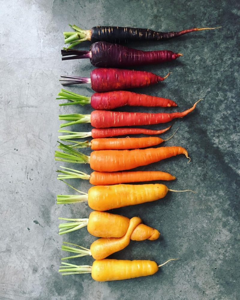 organic carrots in different colors and sizes