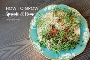 Learn how to grow sprouts from home in this quick and easy tutorial and video. Sprouts are fun and easy to grow and so nutritious to eat.