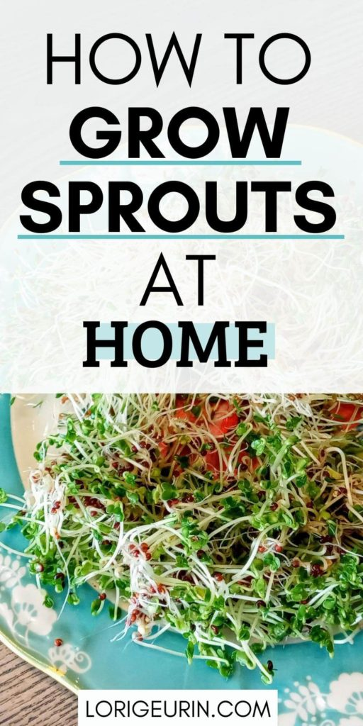 how to grow sprouts at home / alfalfa and broccoli sprouts on a blue plate with text overlay