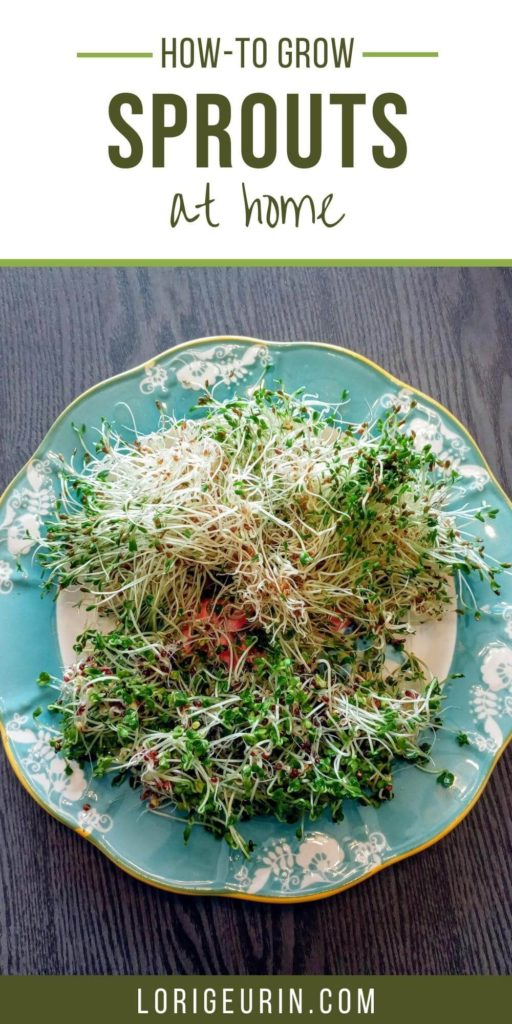how to grow sprouts at home / alfalfa and broccoli sprouts