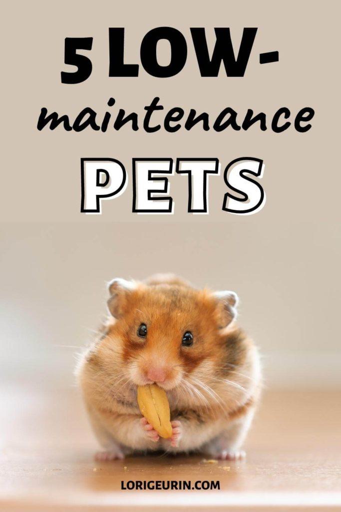 low maintenance pets / hamster