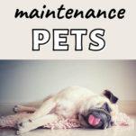 low maintenance pets / pug sleeping